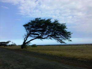 Photo of a tree in Hawaii
